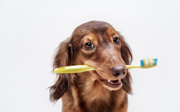 Dental Awareness for your Pets