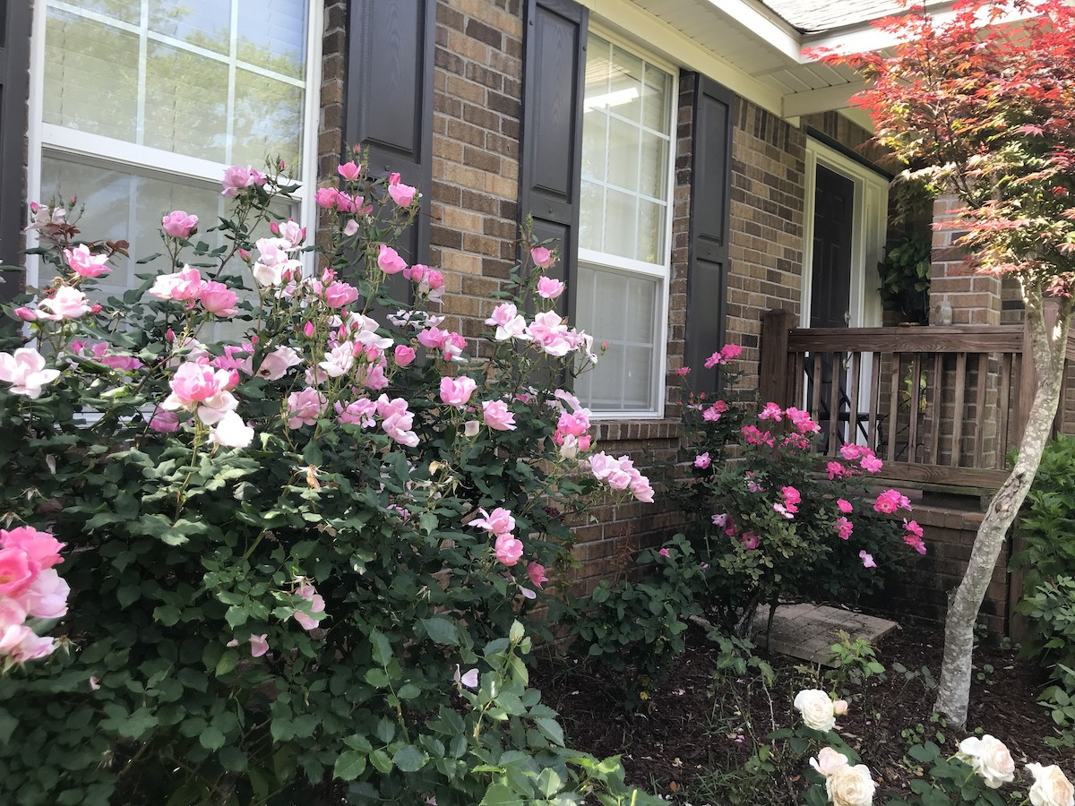 Yard of the Month - May 2019