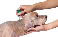 Tick Treatment and Information