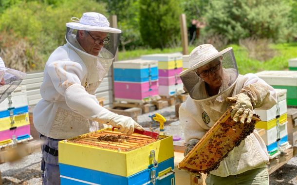 The Busy Bees of the Bay